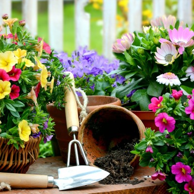 My Top Ten Gardening Tasks in May and June